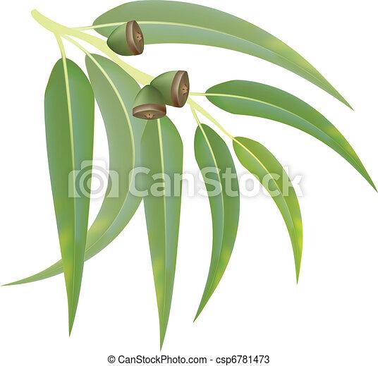 Eucalyptus branch on white background. Vector illustration. - csp6781473