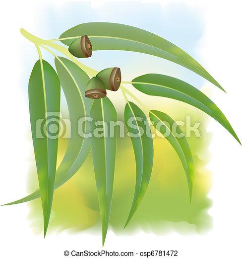 Eucalyptus branch on white background. Vector illustration. - csp6781472