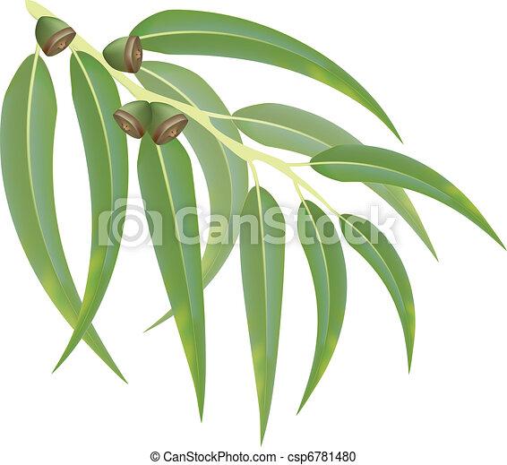 Eucalyptus branch. Vector illustration. - csp6781480