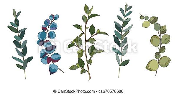 eucalyptus, feuilles, ensemble - csp70578606