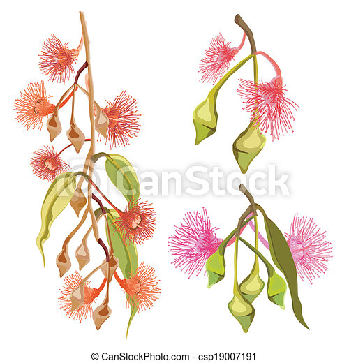 Eucalyptus pink and red flowers gum tree flowers vector gum tree flowers vector mightylinksfo