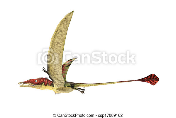 Eudimorphodon flying prehistoric reptile, photorealistic representation, scientifically correct. Side view, On white background. Clipping path included. - csp17889162