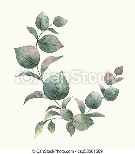 Eukalyptus Branches Blumengebinde Blatter Aquarell Vektor