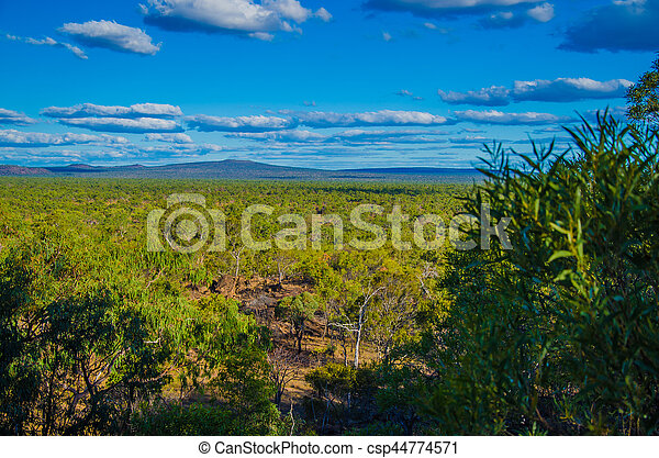 Eukalyptuswald im Undara Volcanic National Park, Queensland, Australien - csp44774571