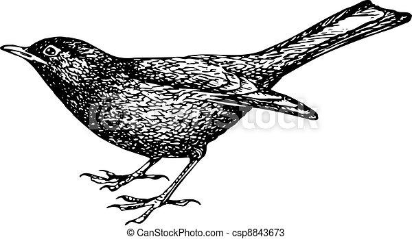Blackbird Clip Art Vector Graphics. 486 Blackbird EPS clipart vector ...