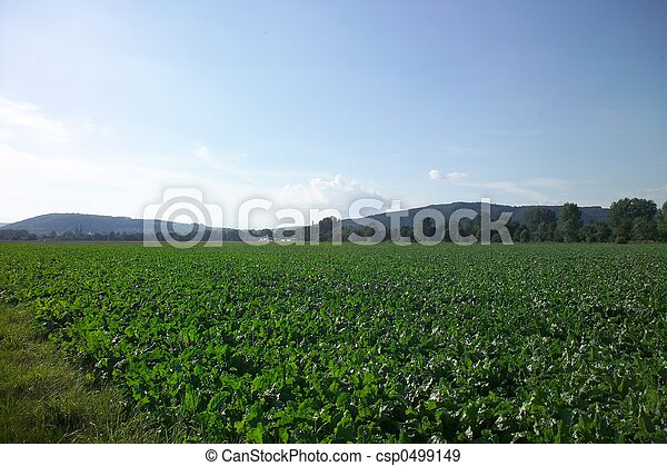 European Agriculture - csp0499149