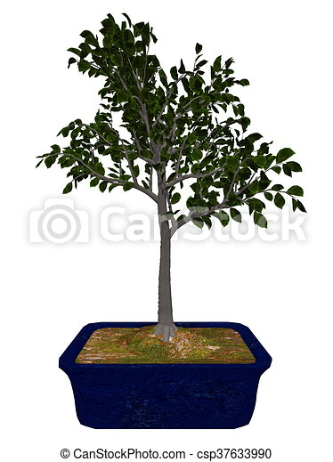 European Beech Tree Bonsai 3d Render European Beech Fagus Sylvatica Tree Bonsai Isolated In White Background 3d Render Canstock