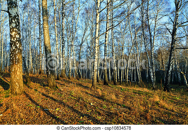 Evening in the autumn forest - csp10834578