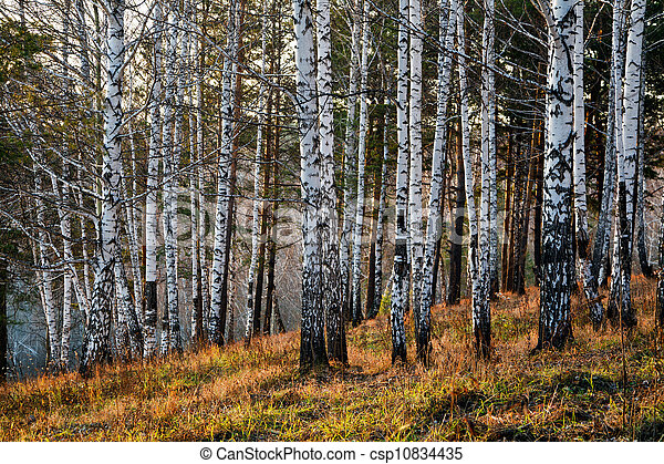 Evening in the autumn forest - csp10834435