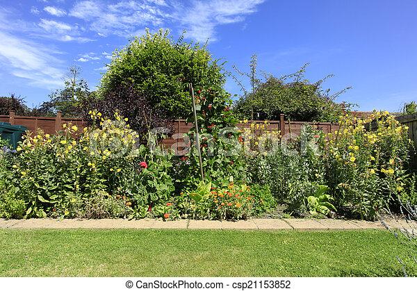 Evening primrose and runner beans - csp21153852