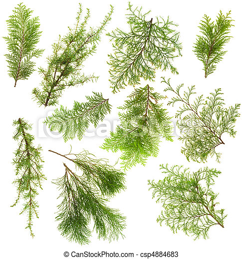 Evergreen plants branches isolated set - csp4884683