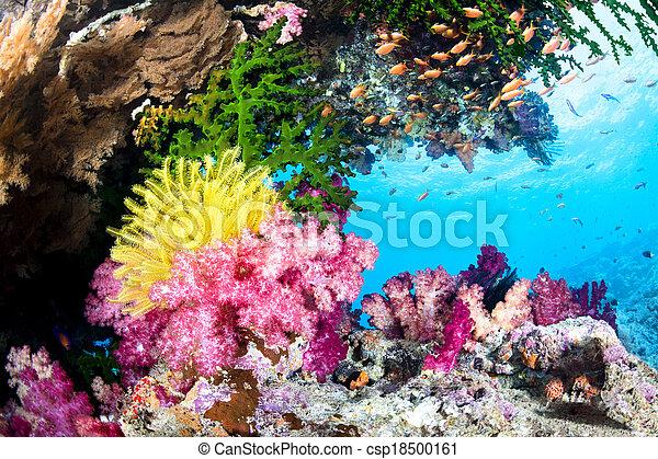 Un arrecife de coral exótico - csp18500161
