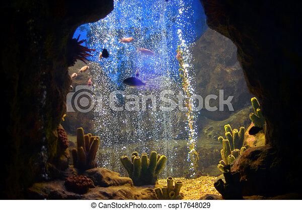 Pescados exóticos - csp17648029