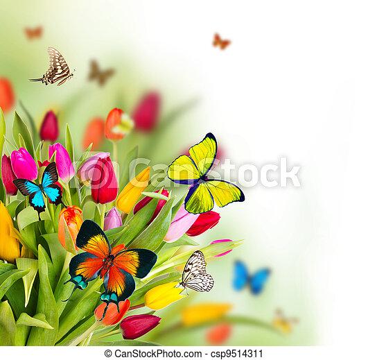 Tulipanes de color flores con mariposas exóticas - csp9514311