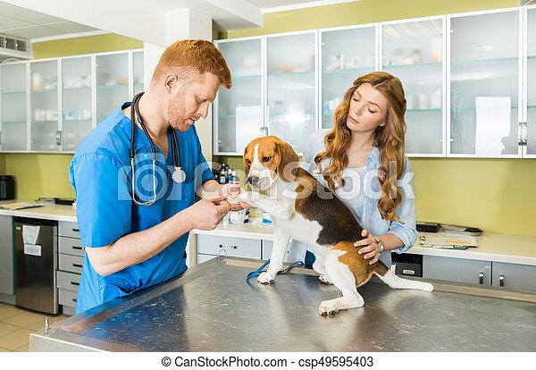 Examinar, médico de mujer, ayudante, veterinario, perro ...