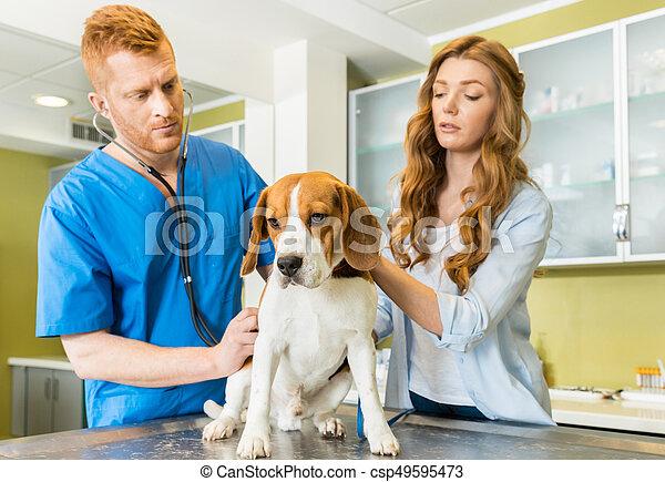 Examinar, médico de mujer, ayudante, veterinario, perro,... imagen ...