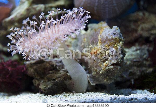 exotic angler fish - csp18555190