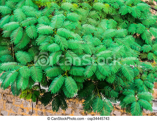 exotic green leaves on the wall background, India - csp34445743