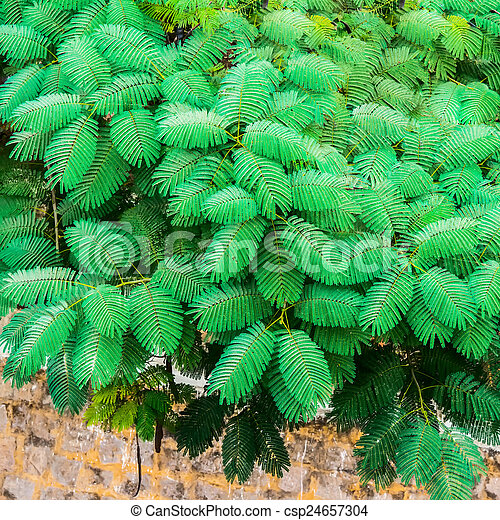 exotic green leaves on the wall background, India - csp24657304