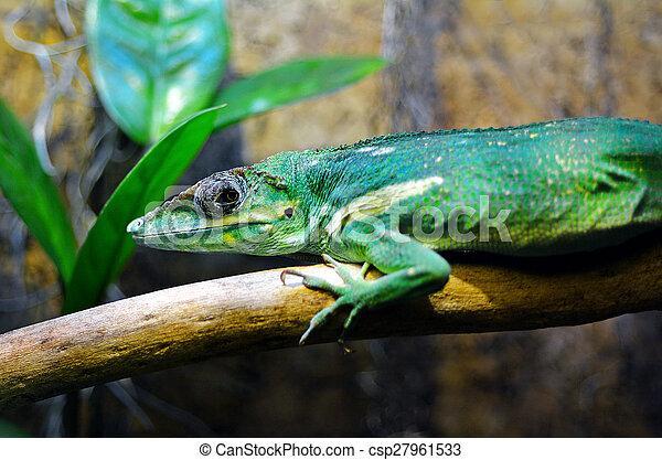 Exotic green lizard Green Anole - csp27961533