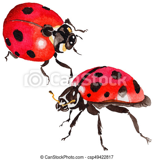 4abdce5f009b7 Exotic ladybug wild insect in a watercolor style isolated. full name of the  insect: ladybug. aquarelle wild insect for background, texture, wrapper  pattern ...