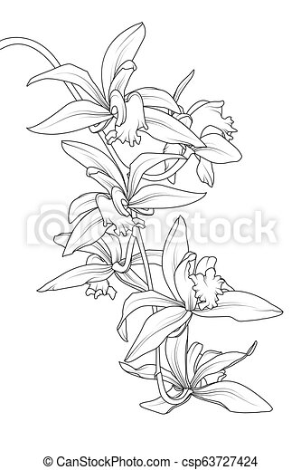 Exotic tropical cattleya orchid flower plant. botanical ...