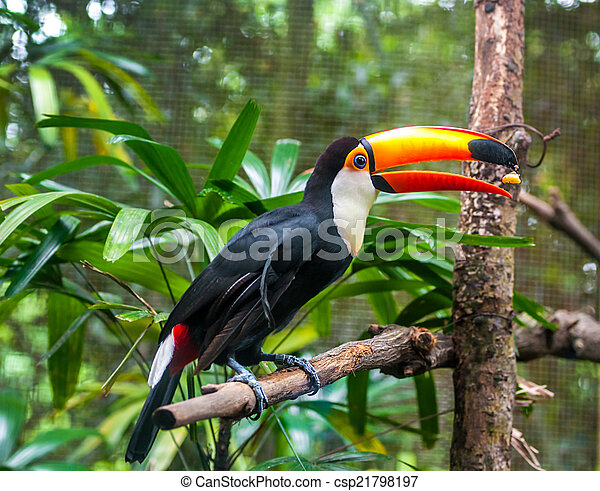 exoticas, fauna, ramo, papagaios, sentar - csp21798197