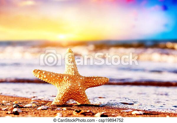 exoticas, starfish, viagem, férias, feriados, morno, conceitos, oceânicos, praia, pôr do sol, waves. - csp19894752