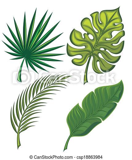 exotique, feuilles, ensemble - csp18863984