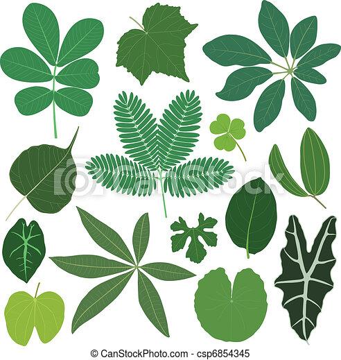 exotique, feuilles, feuille, plante - csp6854345