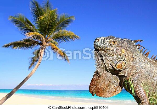 exotique, mexicain, plage, antilles, iguane - csp5810406