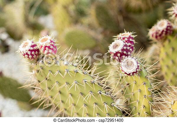 exotique, utilisé, e, paumes, confitures, sommet, méditerranéen, poires, exotique, culture, fruit, groupe, cactus, rouges, épineux - csp72951400
