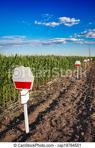 Experimental corn field - csp19764501