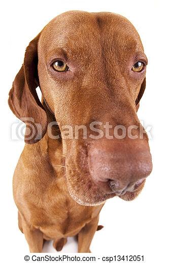 extreme closeup dog portrait - csp13412051