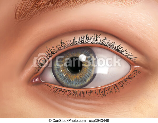 Eye anatomy - csp3943448