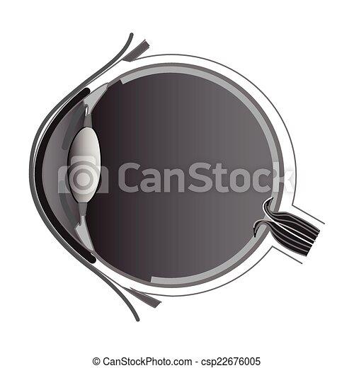 Eye anatomy - csp22676005