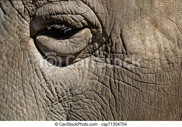 eye closeup of african elephant - csp71304704