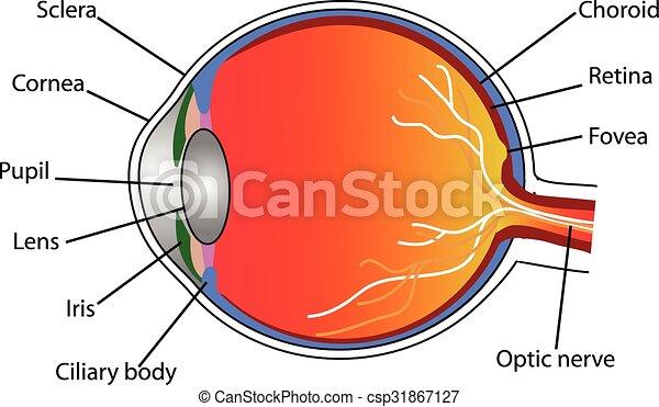 eye - csp31867127
