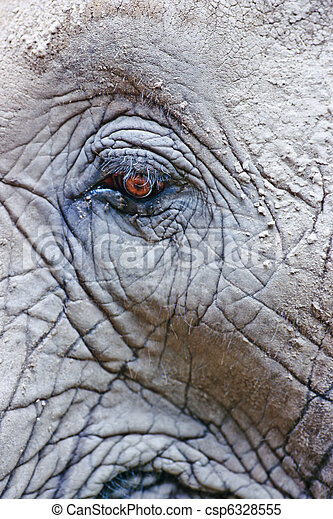 Eye of African Elephant - csp6328555