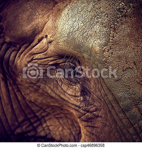 Eye of an elephant. African Elephant - csp46896358