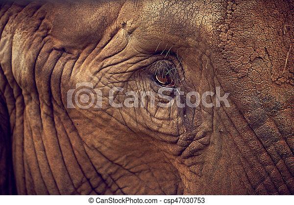 Eye of an elephant. African Elephant - csp47030753