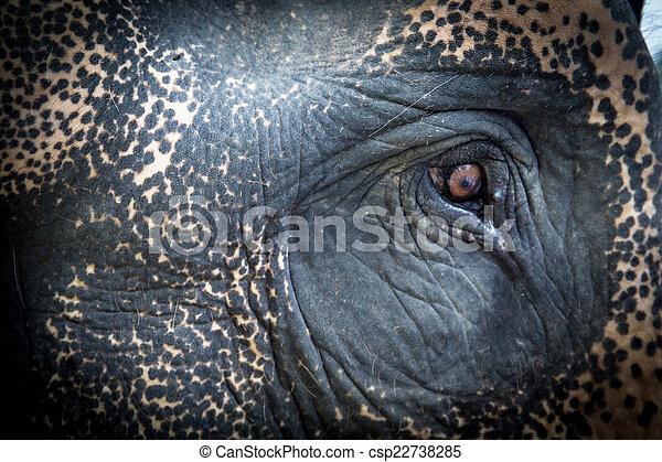 Eye of an elephant - csp22738285