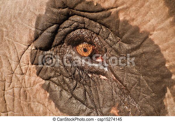 Eye of an elephant - csp15274145