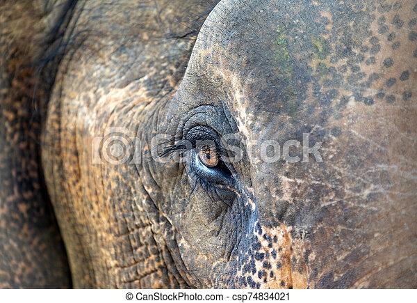 eye of an elephant - csp74834021