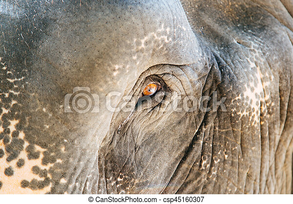 Eye of an elephant - csp45160307