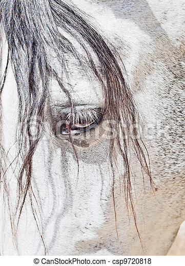 eye of  purebred  Andalusian white horse closeup - csp9720818