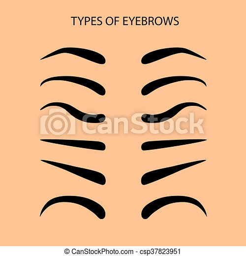 Eyebrows Set Flat Vector Illustration