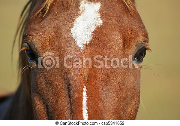 Eyes of a Horse Closeup - csp5341652
