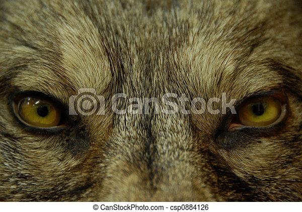 eyes of wolf - csp0884126