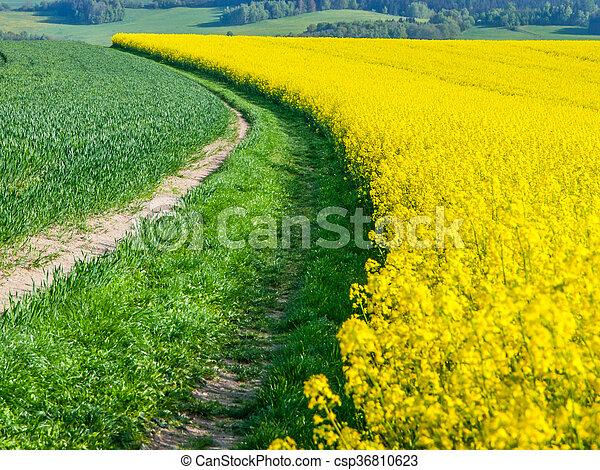 Fält Växt Gul Våldta Tillägger Biofuel Använd Canola Gula